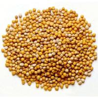 Mustard, Whole Seed 454gr